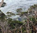 La isla perdida en Magallanes, Chile, que postula a Patrimonio Natural de la Unesco