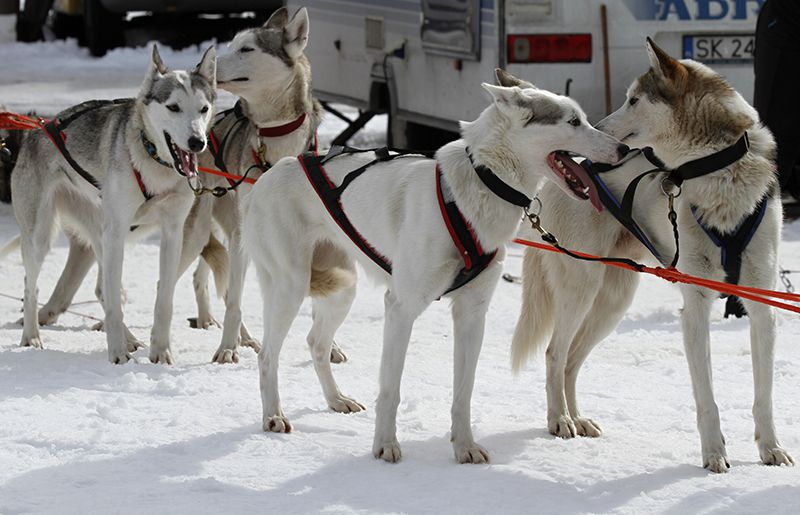 Paseo invernal con perros