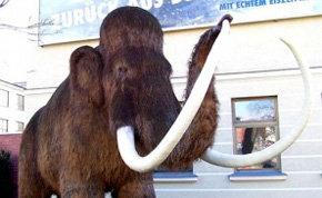 Un meteorito no acabó con el mamut y el oso gigante