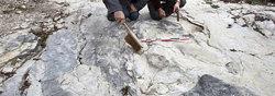Los paleontólogos junto a las huellas de dinosaurio encontradas en Plagne, Francia
