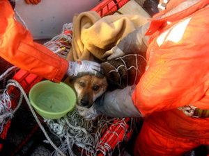Perro rescatado en Japón 21 días después del tsunami