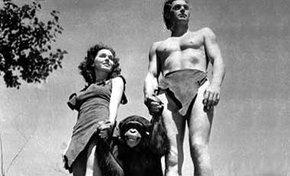 Fallece la mona Chita, chimpance que actuó con Tarzán en los años 30