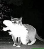 Gato cleptómano