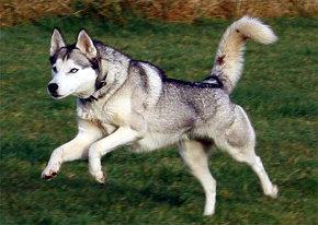 El ejercicio físico regular es vital para la buena salud de un perro adulto