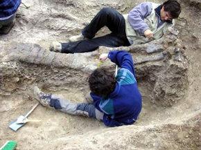 Hallan en Teruel el cráneo del dinosaurio más grande de Europa, de 145 millones de años