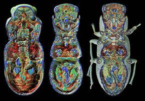 Un investigador de la UGR, premiado por una película que ilustra un viaje al interior de un escarabajo