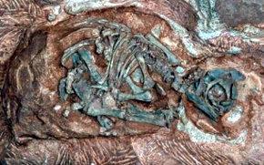 Descubren en África el vivero de dinosaurios más antiguo