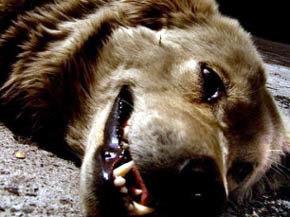 El 60 por ciento de las mascotas que se regalan acaba abandonas o maltratadas, seg�n la asociaci�n Defensa del Animal