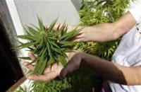 Uruguay comenzará a plantar marihuana en septiembre