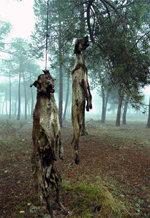 El horror de una práctica habitual en España