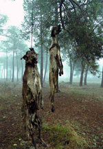 El horror de una pr�ctica habitual en Espa�a