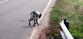 Se quintuplica el abandono de animales por la crisis