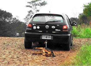 Salvajismo e impunidad: ata a un perro a su autom�vil y lo arrastra hasta matarlo�
