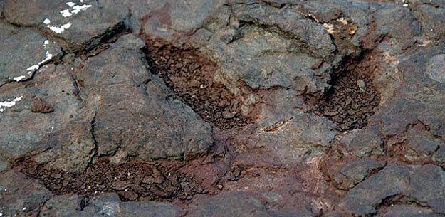 Entre huellas de dinosaurios