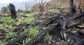 La deforestación preocupa en Ecuador