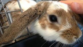 Los conejos son la principal atracción de un café en Tokio