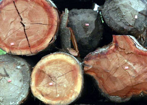 Andalucía fomenta el uso energético de la biomasa forestal
