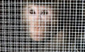 United Airlines se niega a transportar monos para laboratorios de ciencia