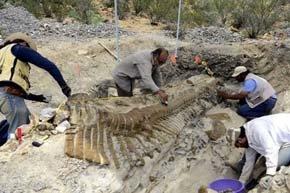 Paleontólogos excavan la cola de un dinosaurio en Coahuila. / Mauricio Marat (EFE)
