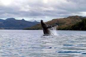 Descubre la Patagonia de Magallanes