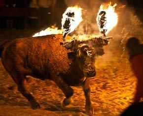 El Toro Jubilo de Medinaceli