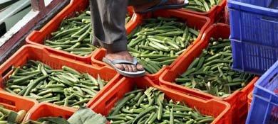 Las verduras pueden jugar un papel importantísimo para la salud de nuestro cerebro. (Efe)