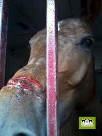El torero Canales Rivera, condenado por maltratar a su caballo