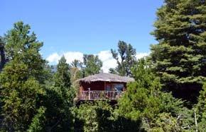 Pucón: Chile cuenta con nuevo hotel arriba de los árboles