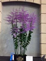 Orquídea ecuatoriana la mejor entre 80 mil en festival de Tokio