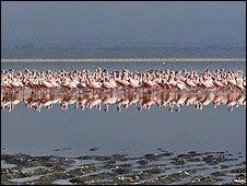 De la noche a la mañana, los flamencos abandonaron el lago dejando sus nidos detrás