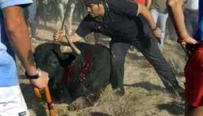 La Policía disuelve a la fuerza la concentración contra el Toro de la Vega mientras sus 'detractores' triunfan en Twitter