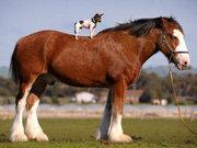 El chihuahua y el caballo, protagonistas de esta insólita historia