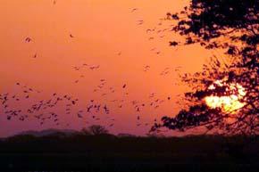 Ecuador acogerá la convención internacional sobre especies migratorias