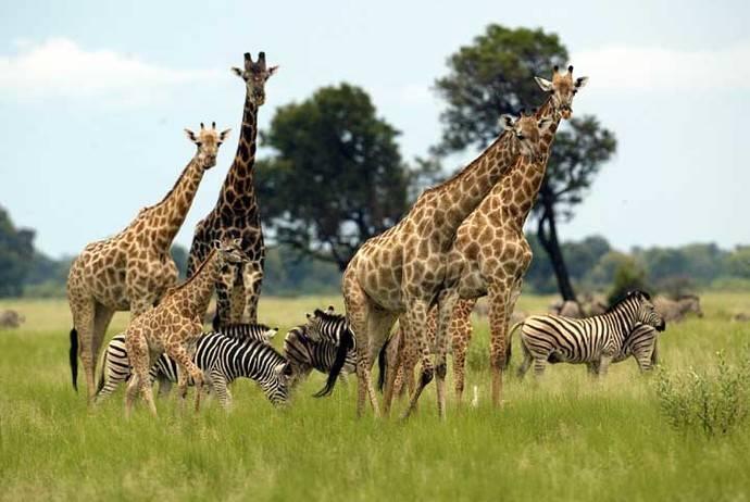 Botsuana y Zimbabwe, dos países africanos casi desconocidos, que hay que explorar