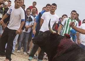 Castilla y León prohíbe matar reses en espectáculos como el Toro de la Vega