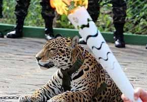 El triste final del jaguar exhibido con la antorcha ol�mpica