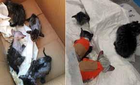 Detenido por quemar vivos a una camada de gatos en Alicante