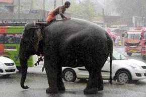 Francia proh�be el comercio de marfil de elefante y de cuernos de rinoceronte