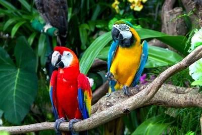 Costa Rica ofrece una nueva ruta nacional para impulsar el aviturismo