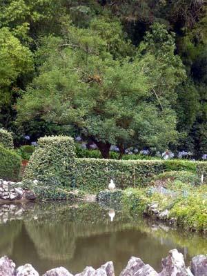 Descanso de cuerpo y espíritu en el bosque de Buçaco y la ciudad termal de Luso