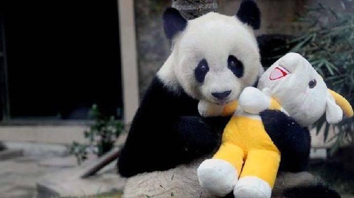 China: Muere a los 31 años el 'abuelo panda'