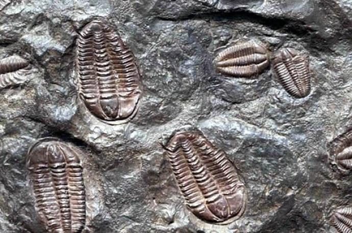 Hallan en Argentina fósiles de 500 millones de años, inéditos en Suramérica