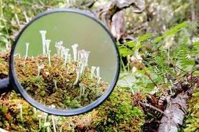 Ecoturismo con lupa para ver los bosques en miniatura de Cabo de Hornos, Chile