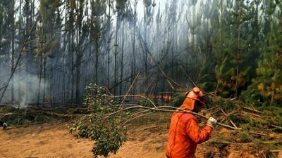 Incendios forestales consumen casi 90.000 hectáreas en Chile