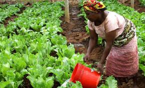 El África subsahariana pasará más hambre en 2050