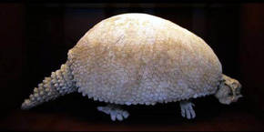 Representación de un gliptodonte