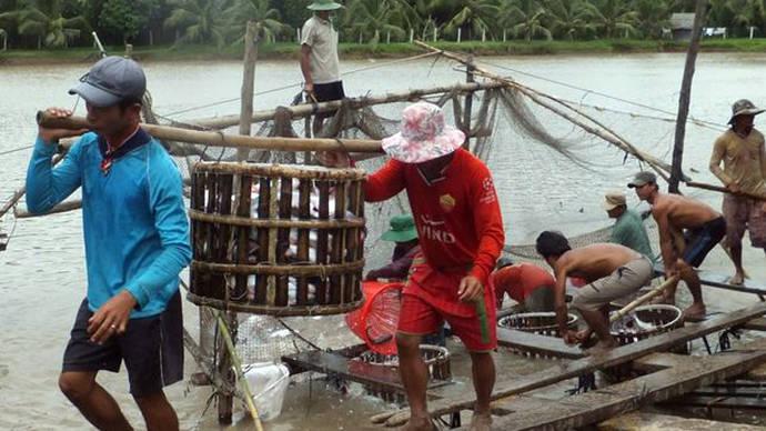 El éxito del panga en Europa está detrás del daño ecológico que causa su producción masiva en Vietnam