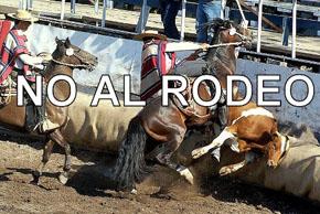 ¡¡NO al Rodeo!!