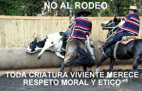 La Tortura a un animal no es arte ni cultura y mucho menos, deporte