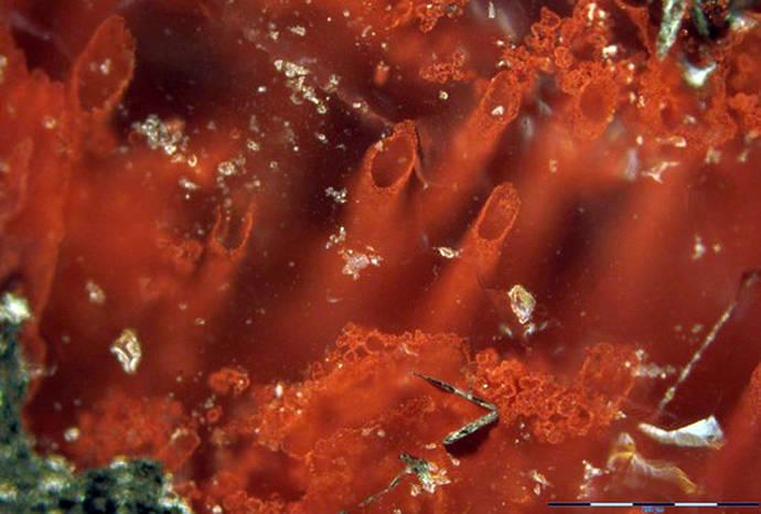 Hallados los fósiles más antiguos de la Tierra
